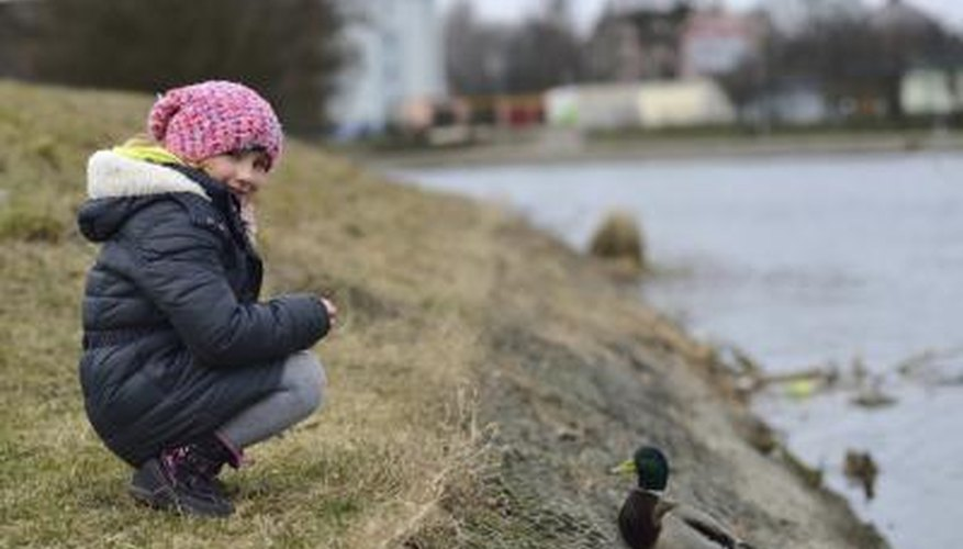 A child feets a duck at the edge of a lake.