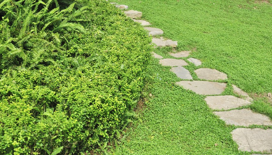 Even a simple stepping-stone path becomes a focal point in a lawn.
