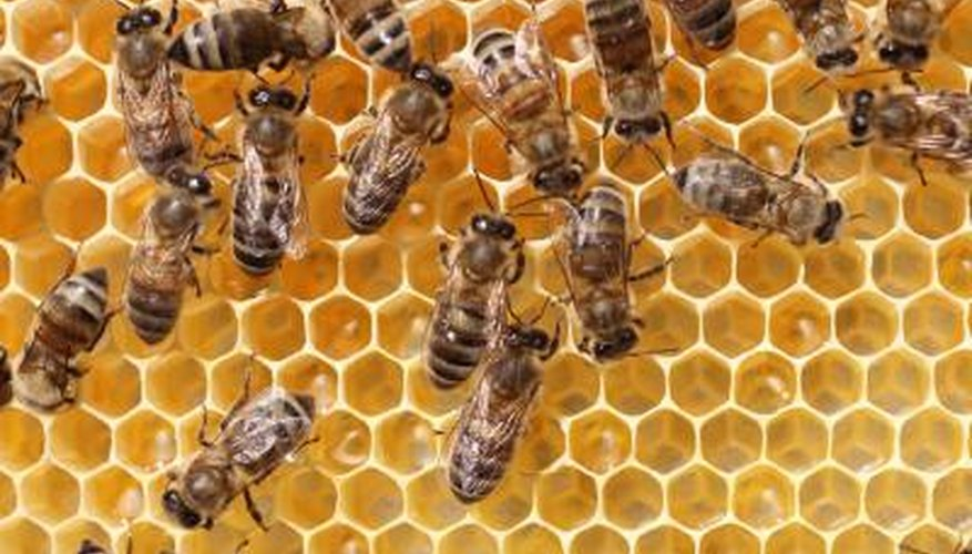 Bees convert nectar into honey and cover it in a comb
