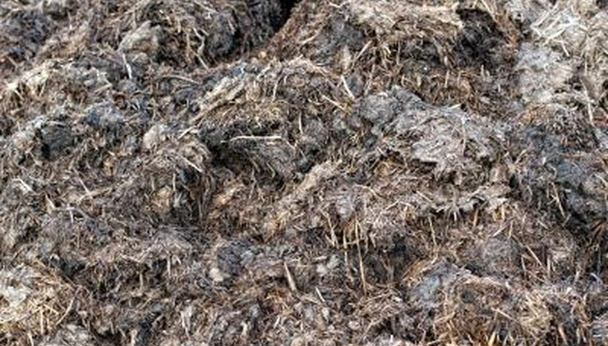 rotten manure compost