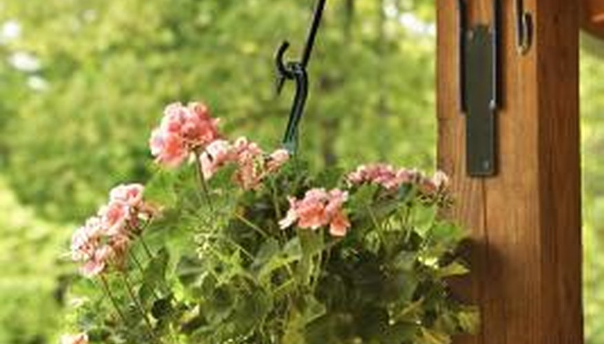 Dress up your pergola with beautiful hanging baskets.