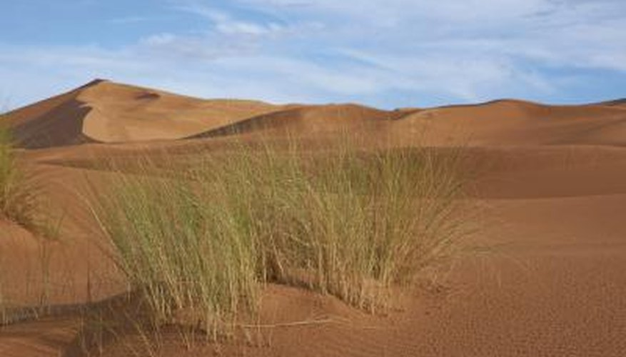 There are some grasses spread throughout the Sahara.