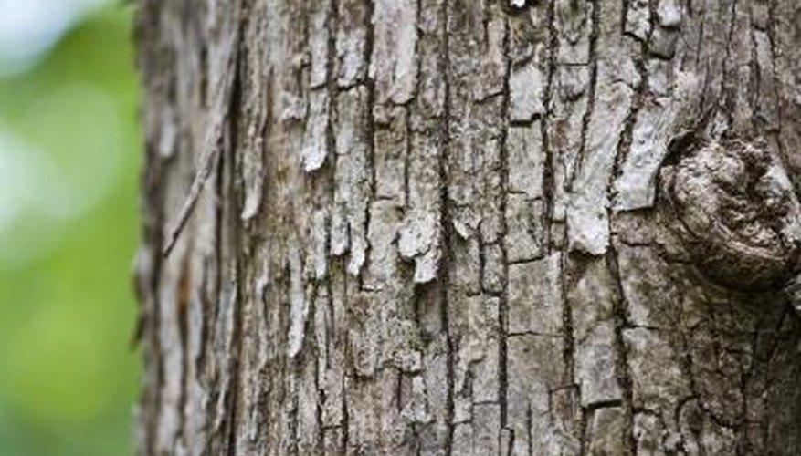 The bark of a teak tree.