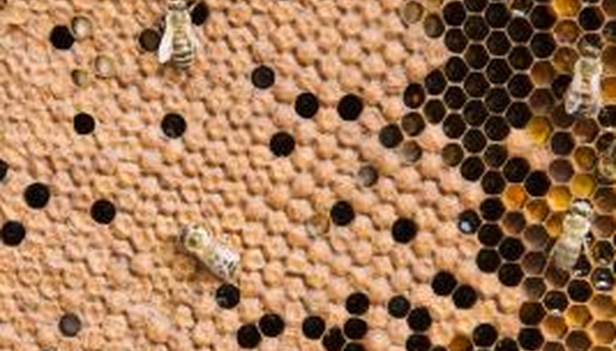 Abandoned honeycombs can attract any number of pests.