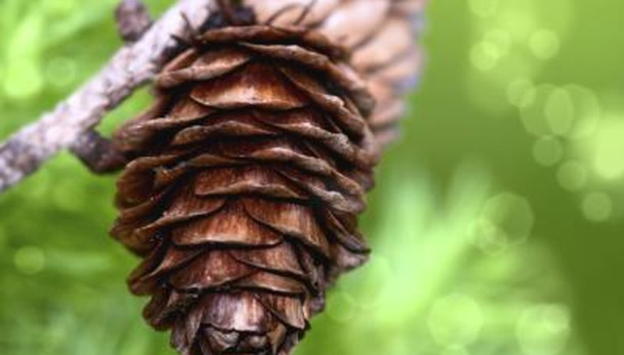 Pine cone and horizontal