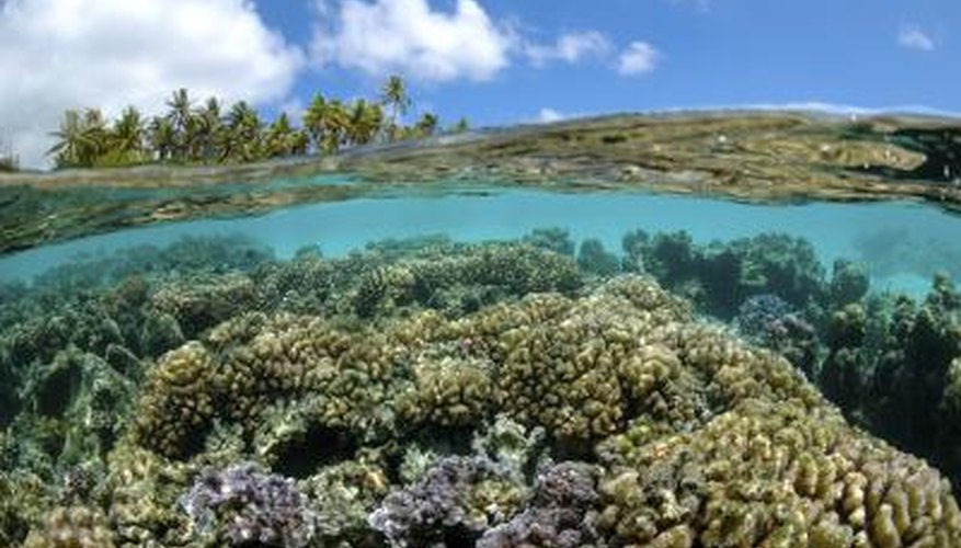 A coral reef thrives in Polynesia.
