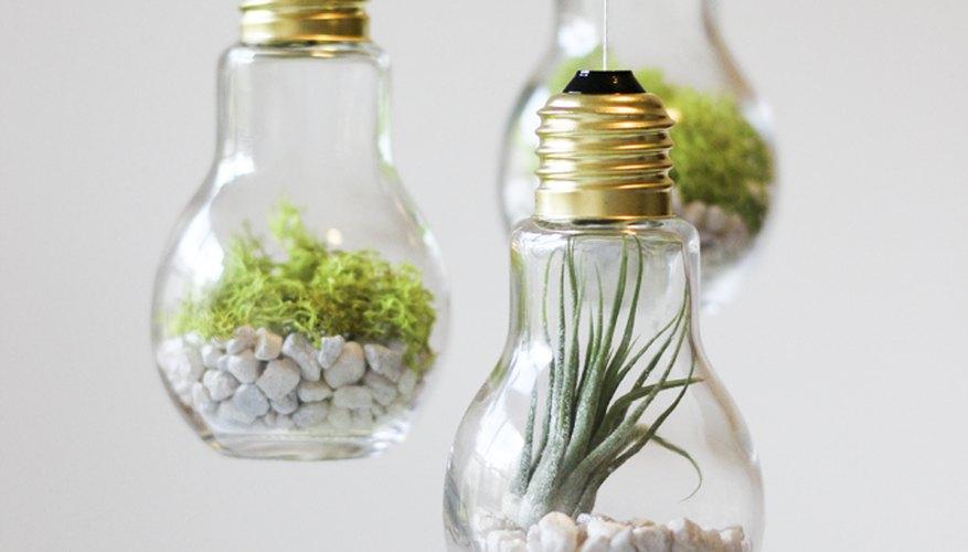 Terrarios colgantes elaborados con bombillas de luz