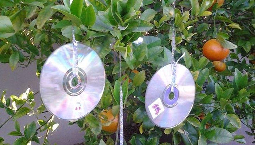 Imagen de una planta con CDs colgando para espantar a diferentes aves