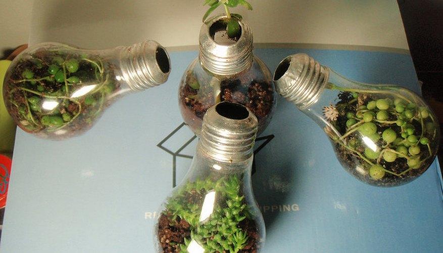 Diferentes ecosistemas alojados sobre bombillas de luz