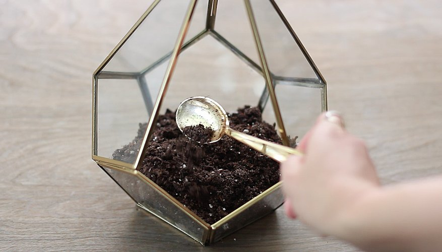 how to make a succulent terrarium with charcoal