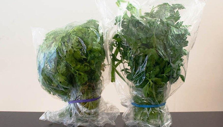 Racimos de perejil guardados en bolsas plásticas