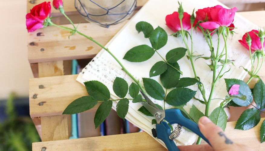 How To Take Care Of Roses In Vases Homesteady