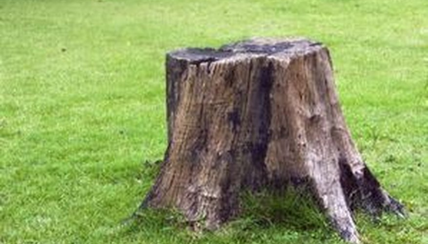 Who knew Epsom salt could help this old stump more than your sore muscles?