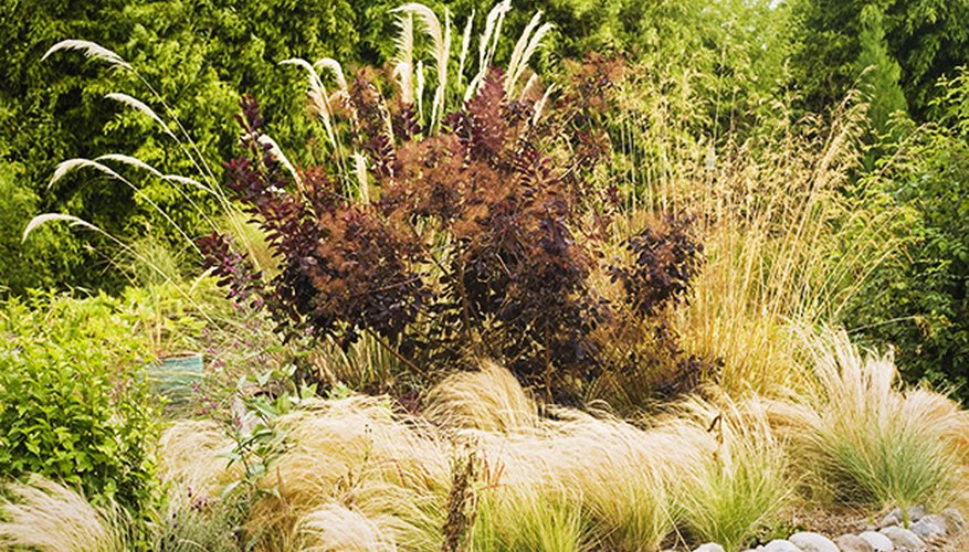 Xeriscaping also focuses on irrigation techniques and soil evaluation to create beautiful, water-thrifty gardens.