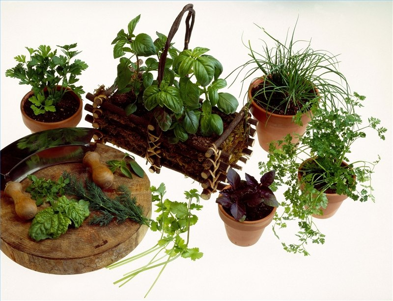 How To Grow An Herb Garden Indoors Ehow