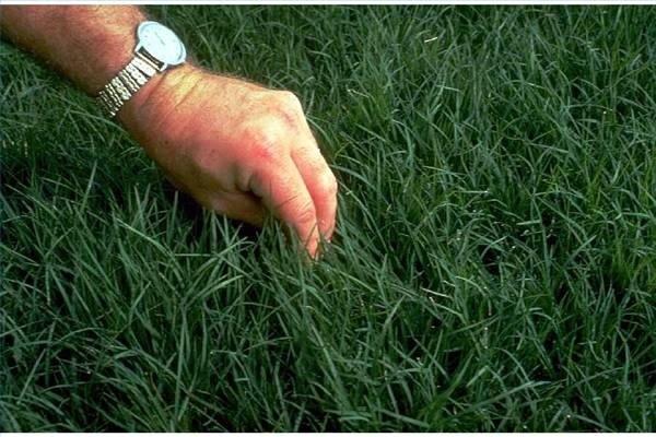 How to Plant Jiggs Bermudagrass | eHow