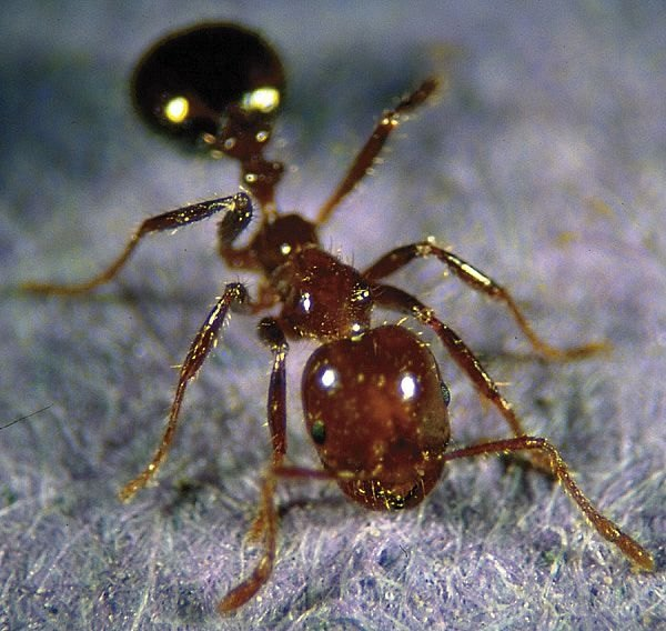 How To Get Rid Of Ants In Your Yard Easily