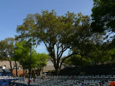 What To Plant Under The Shade Of A Southern Oak Tree Ehow