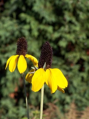 The best perennial flowers for new jersey with pictures ehow mightylinksfo