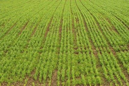 romanian village farming hay meadows leaf hay and subsistence