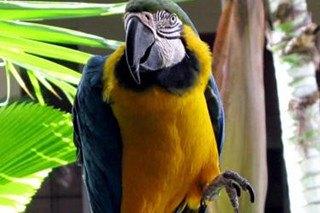Top 10 Bird Breeds