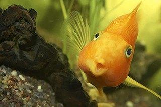 Top 10 Fish Breeds