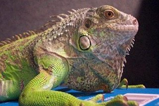 Top 10 Reptile Breeds