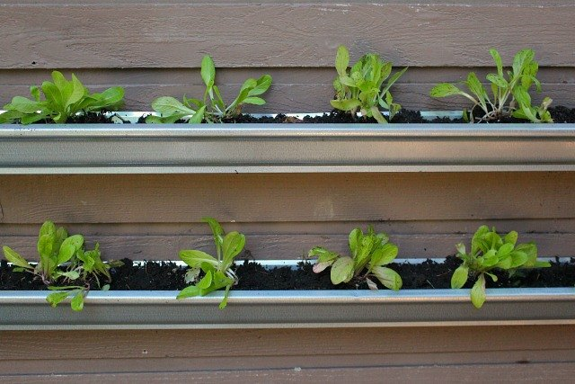 How To Grow Lettuce On A Wall Ehow
