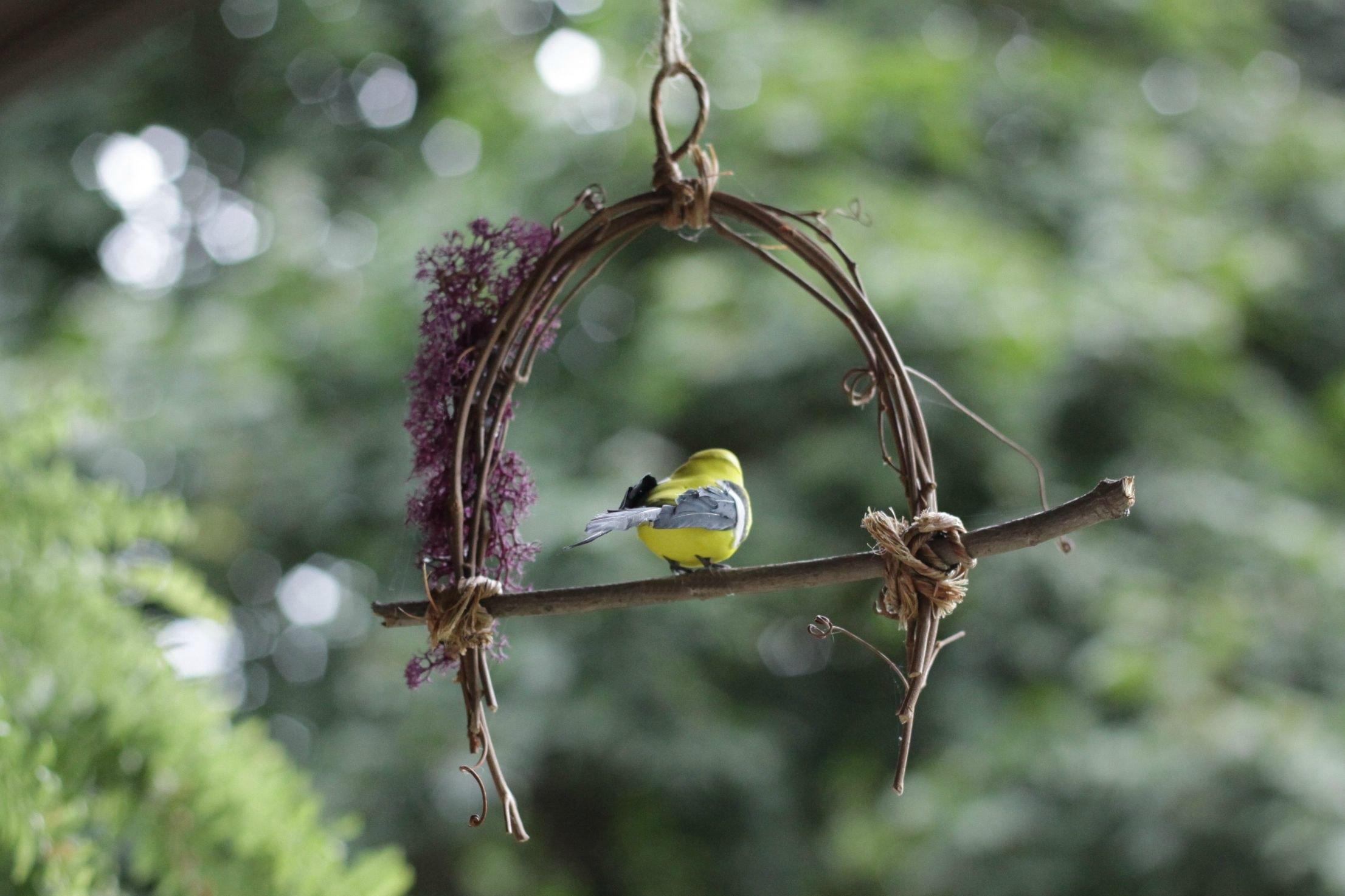 how to make a bird garden