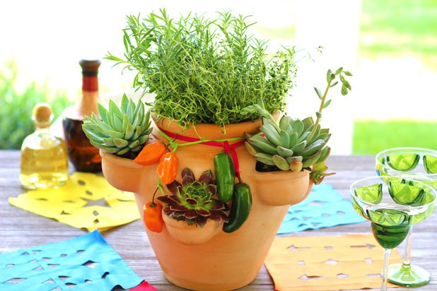 Herb and succulent garden centerpiece