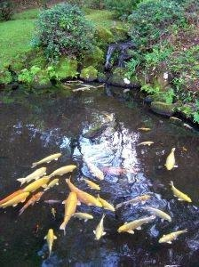 How To Build A Waterfall In A Fish Pond Ehow
