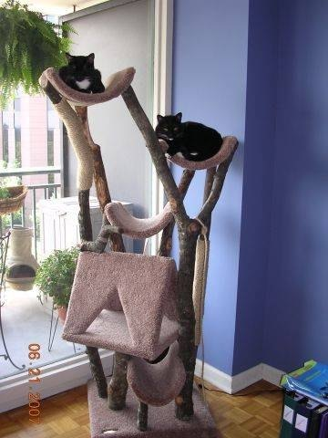 cat tree house how to make a cat tree house ehow 29699