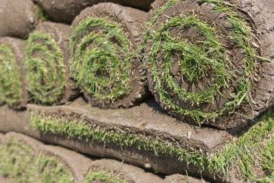 Sod is delivered in rolls that can be spread on prepared ground quickly and easily.