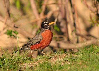 How To Keep Robins From Building Nests On A House With