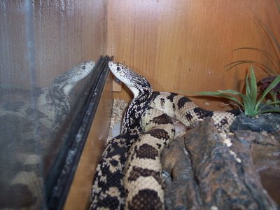 How To Get Rid Of Chicken Snakes Ehow