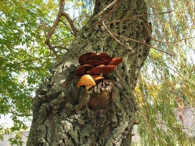 Why Do Wild Mushrooms Grow On Trees? | EHow