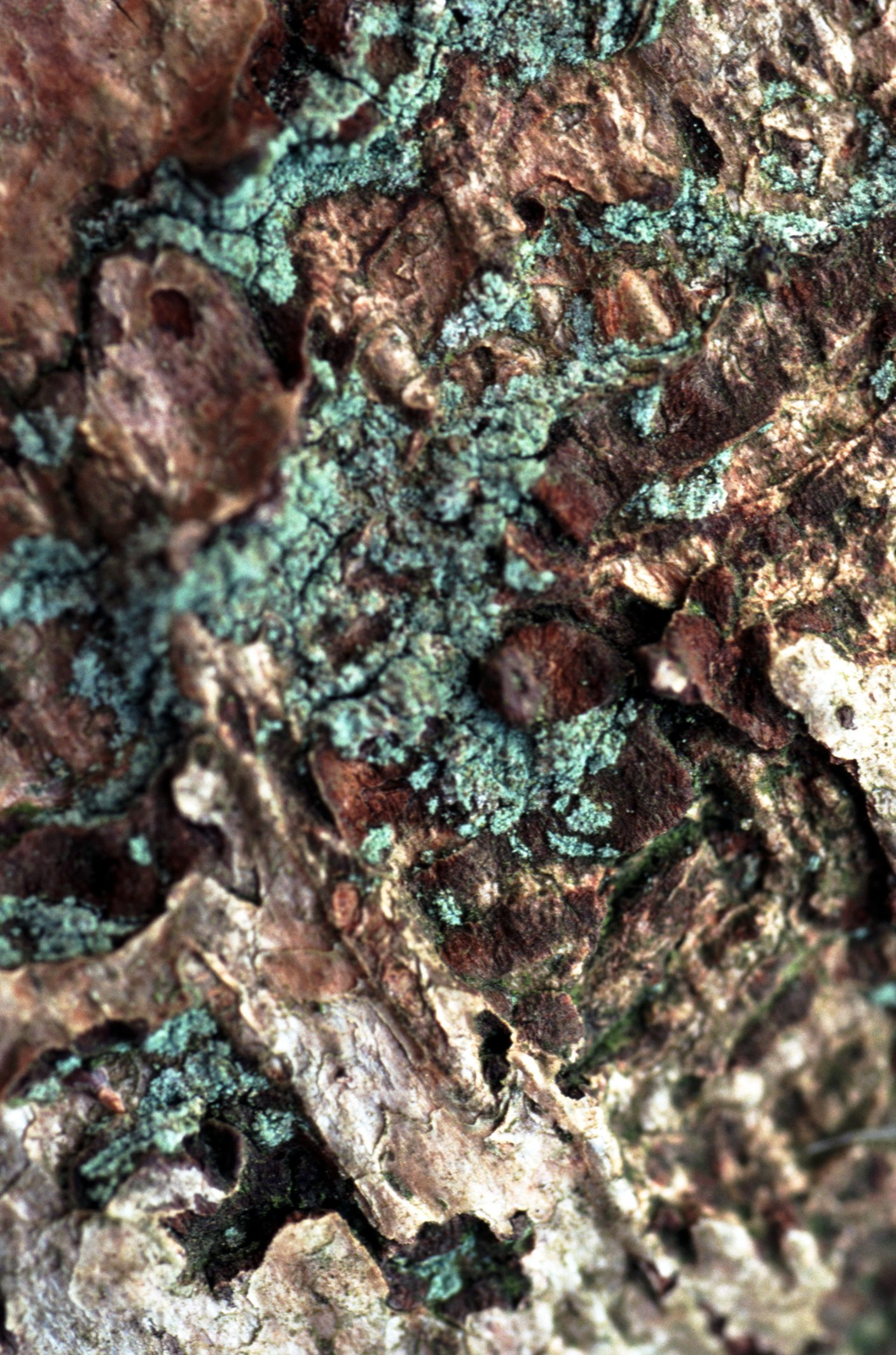 How To Preserve Lichen And Moss On A Tree Branch