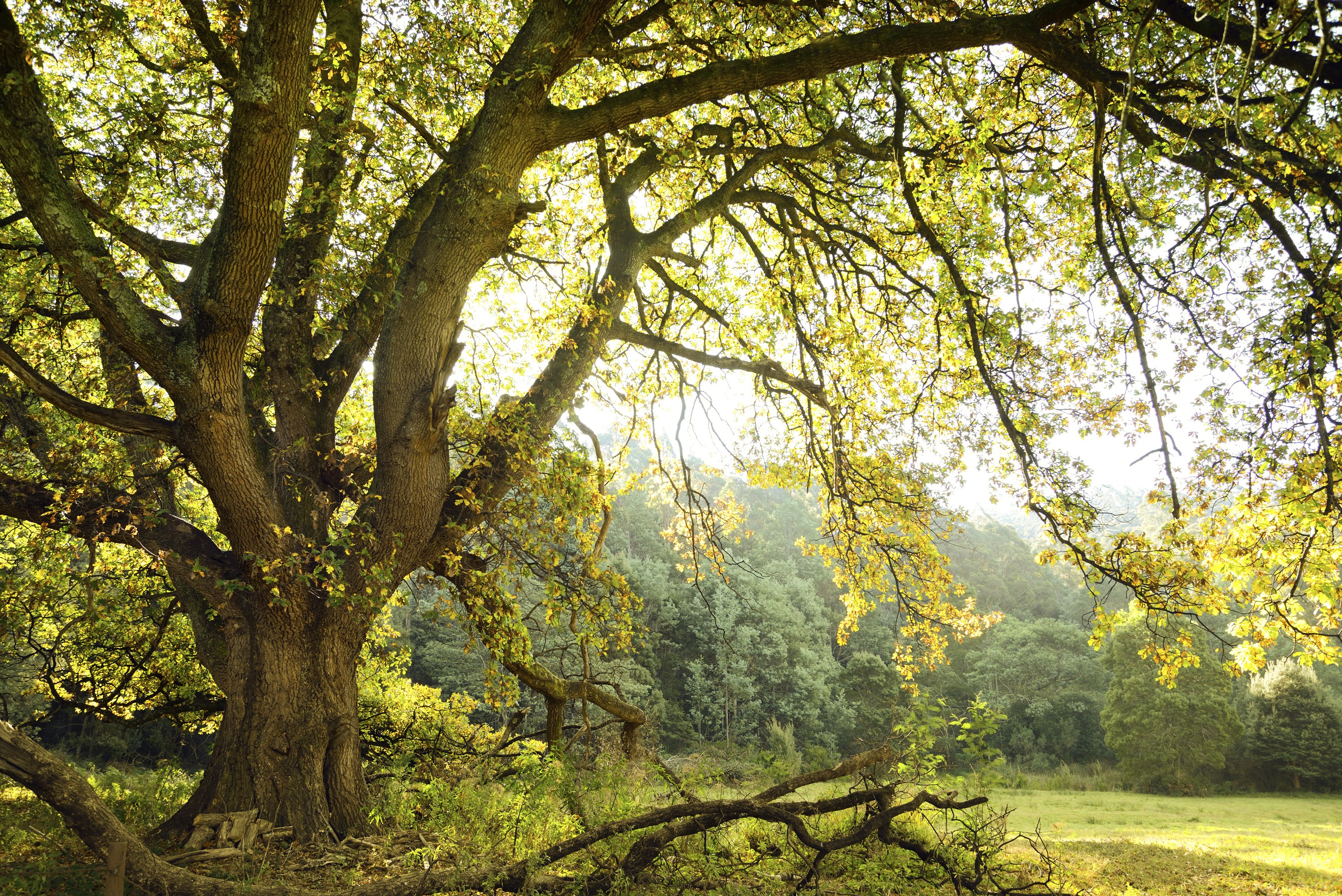 What Types Of Trees Are Hardwoods With Pictures Ehow
