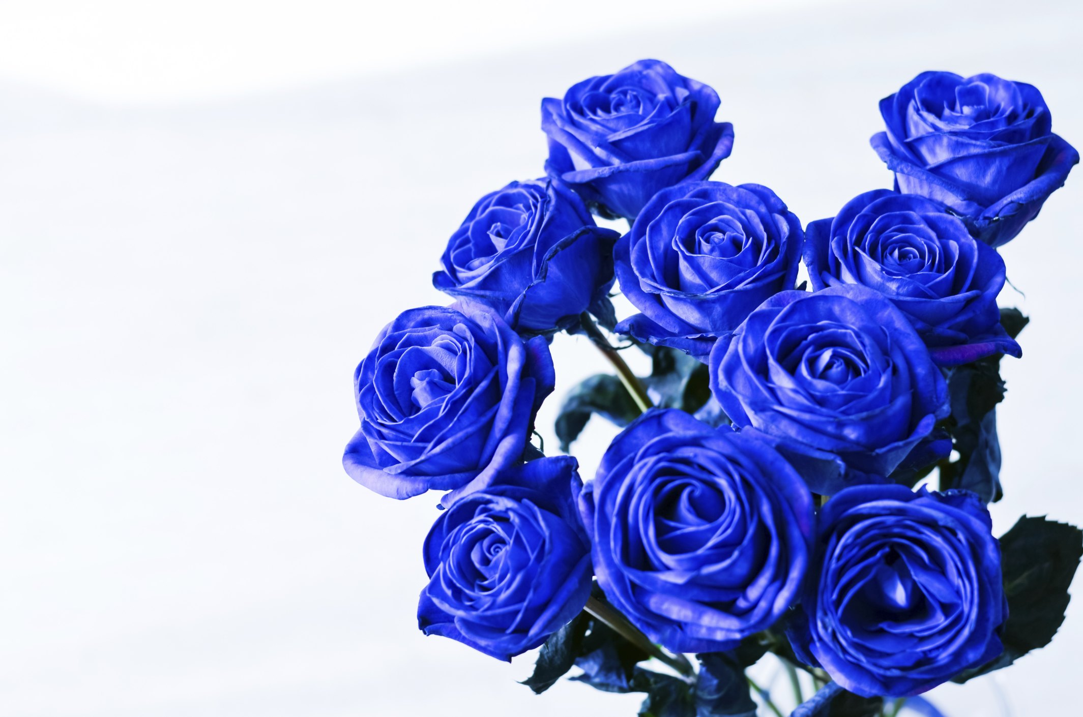 How to dye a white rose a different color ehow for Do black roses really exist