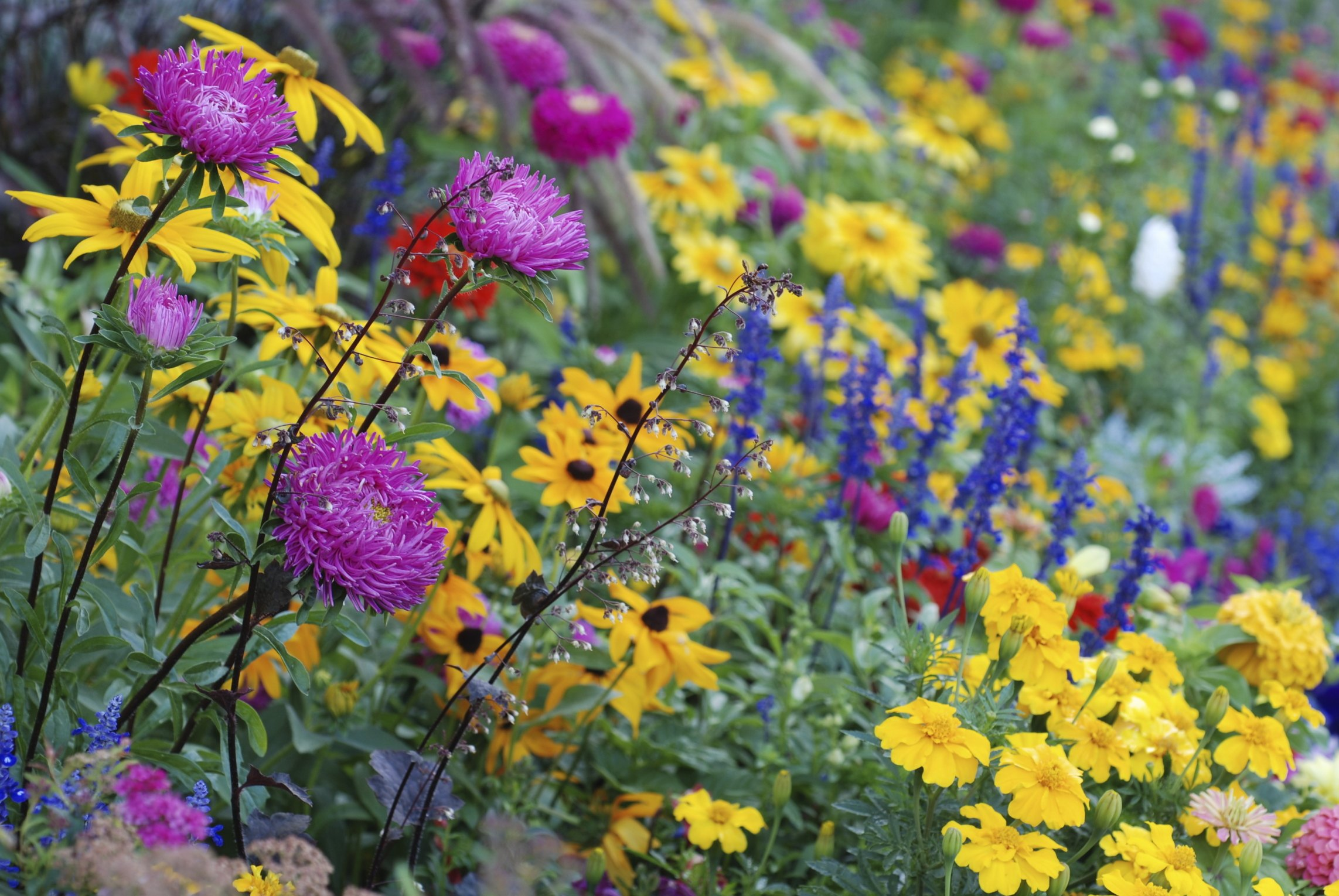 Perennials That Bloom All Spring And Summer With Pictures