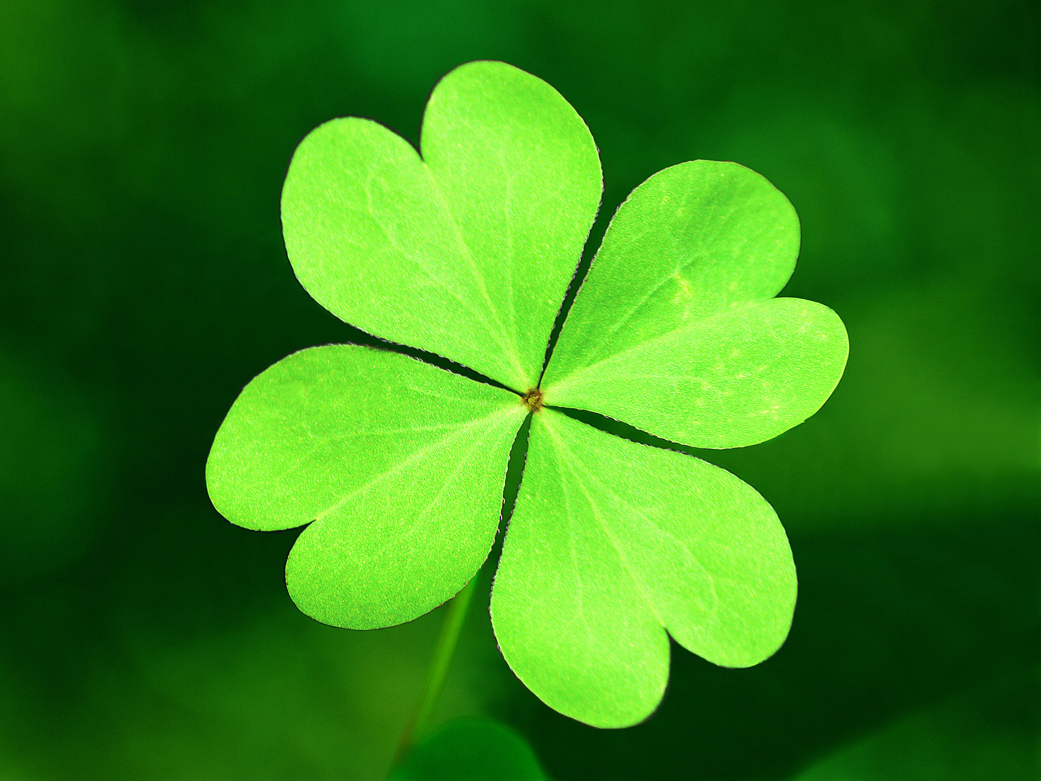 Is There Any Way to Revive a Dying Shamrock Plant? | eHow