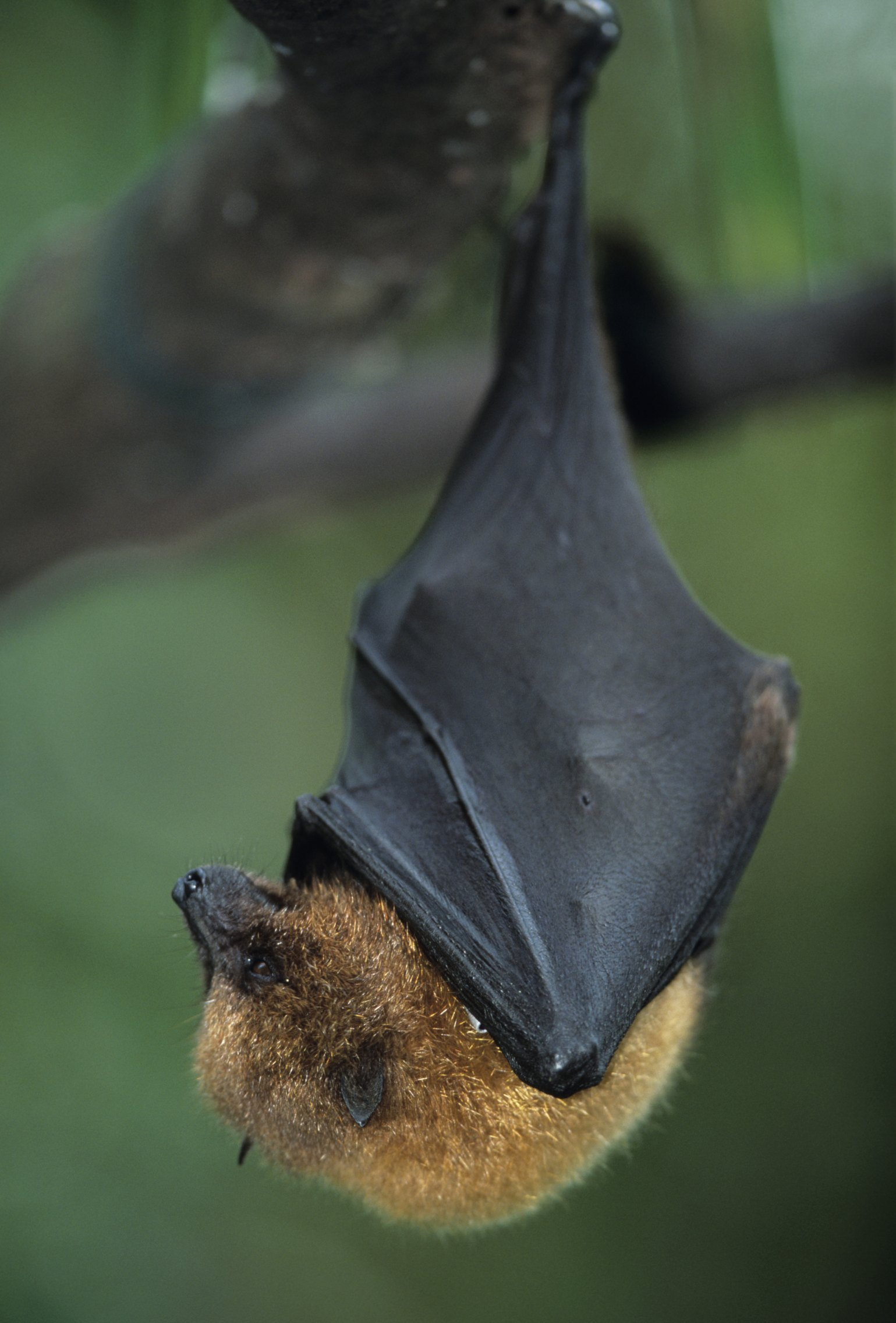 How To Prevent Bats From Hiding Under A Porch Awning Ehow