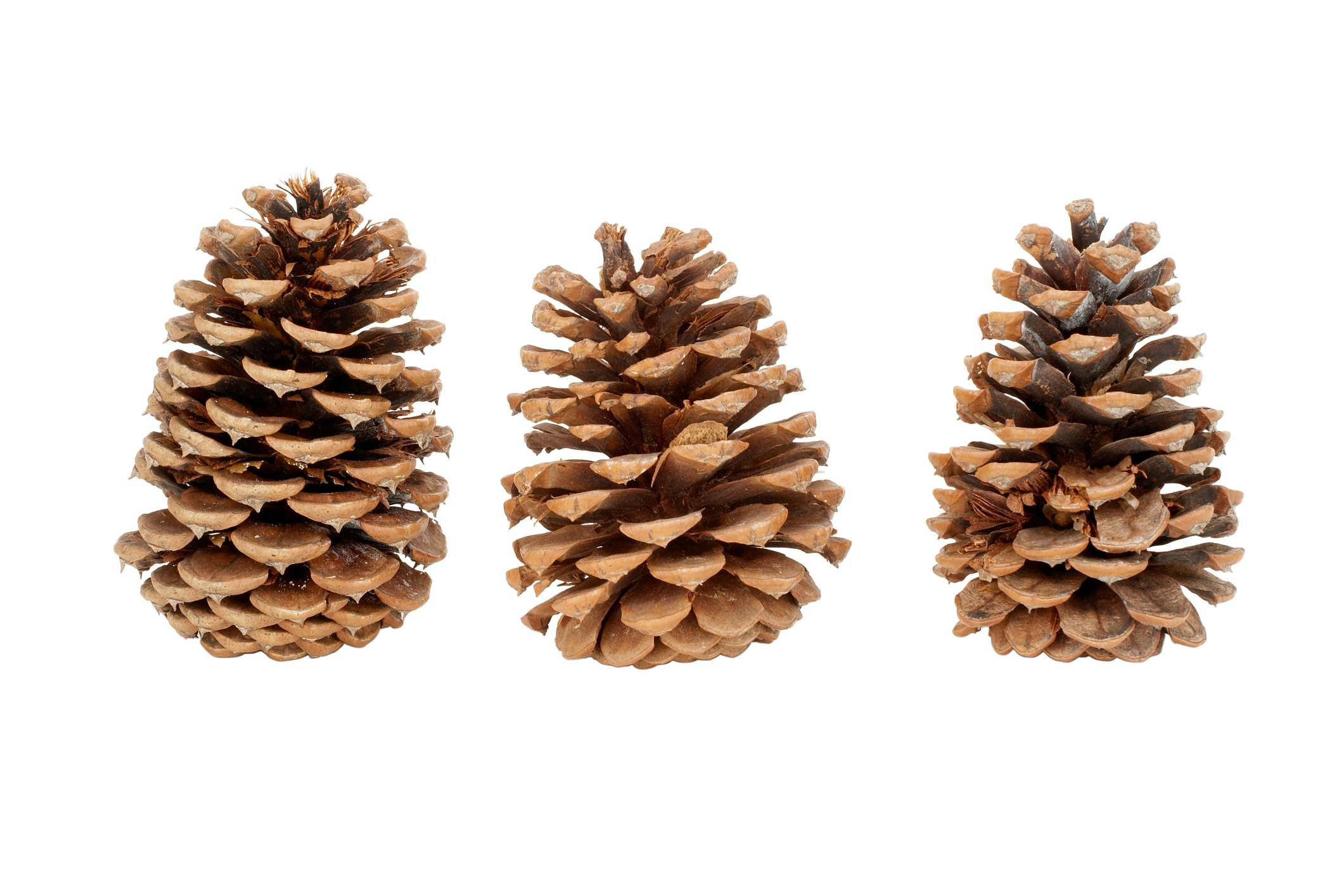 The Fastest Way To Get Pinecones To Open Up Ehow