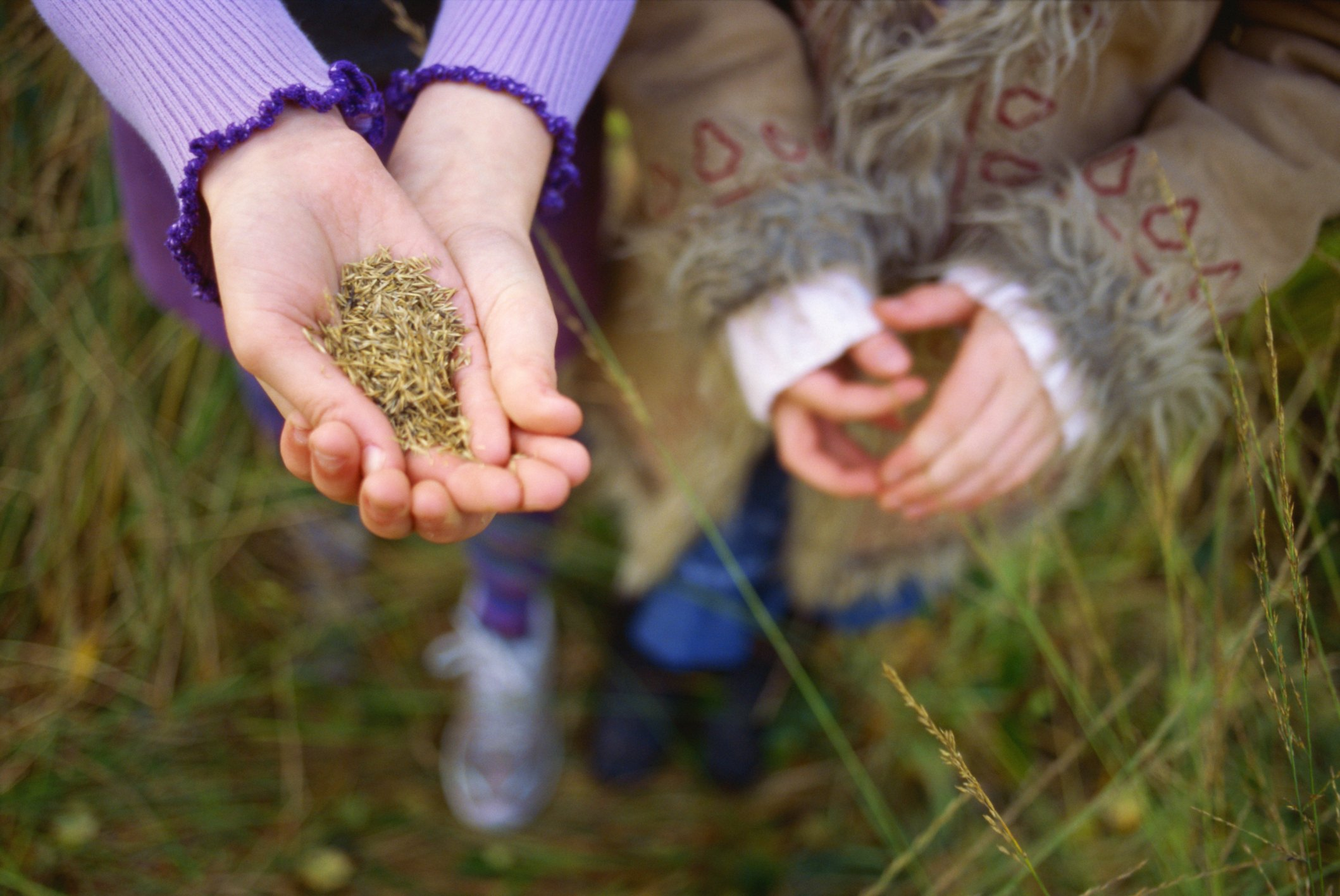 How To Harvest Grass Seed Ehow