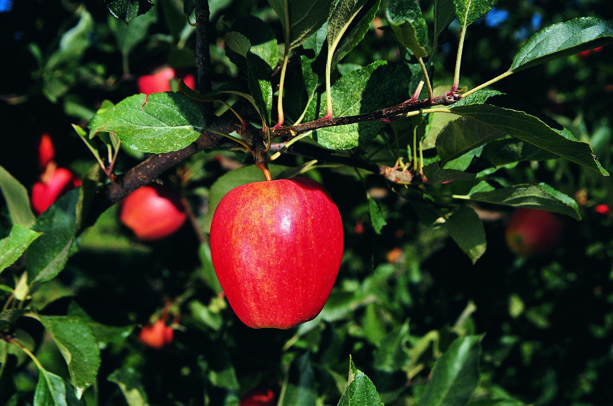 Homemade organic pesticide for fruit trees ehow - Homemade organic pesticides ...