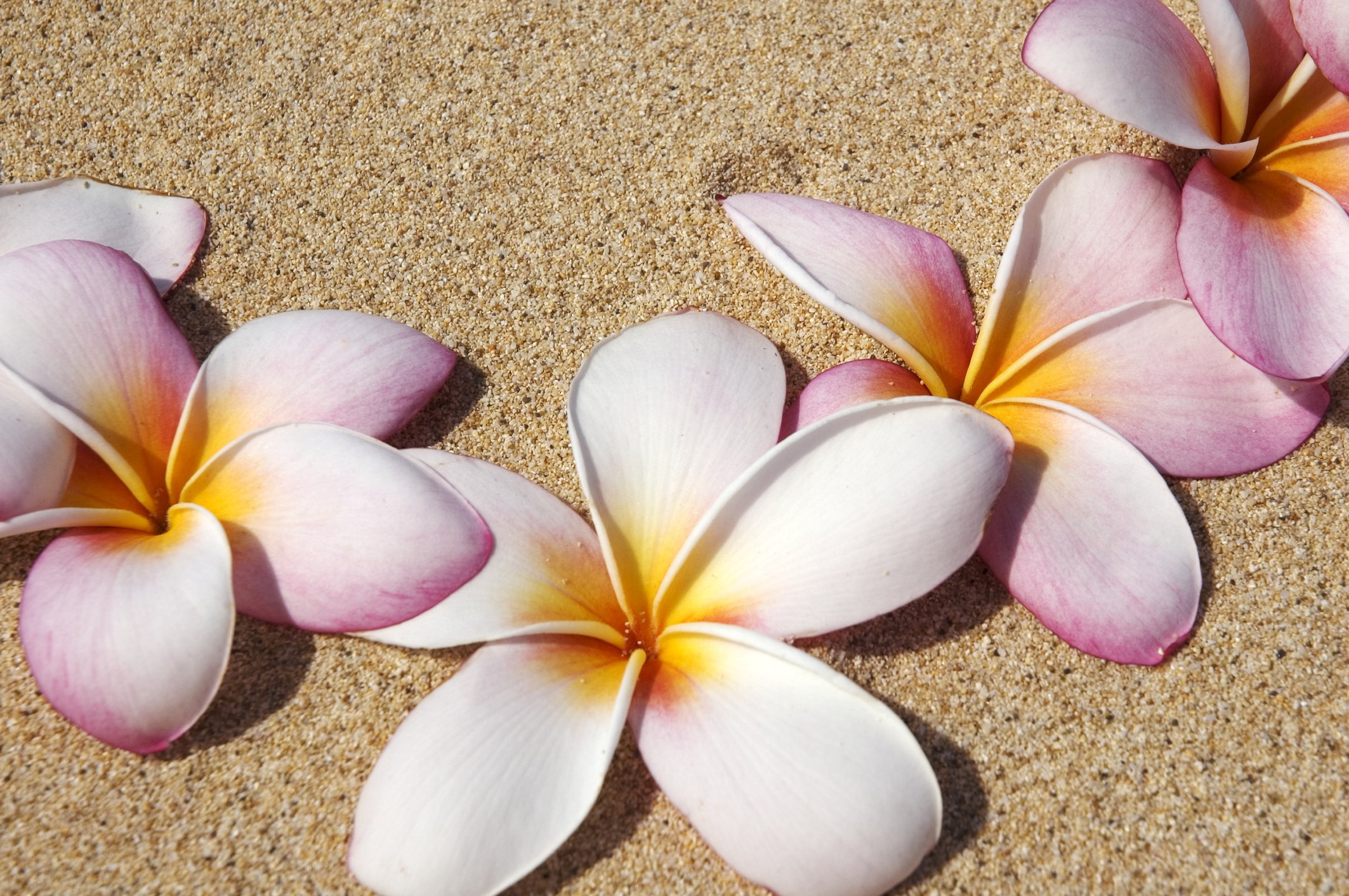 How to make plumeria foam flowers ehow izmirmasajfo