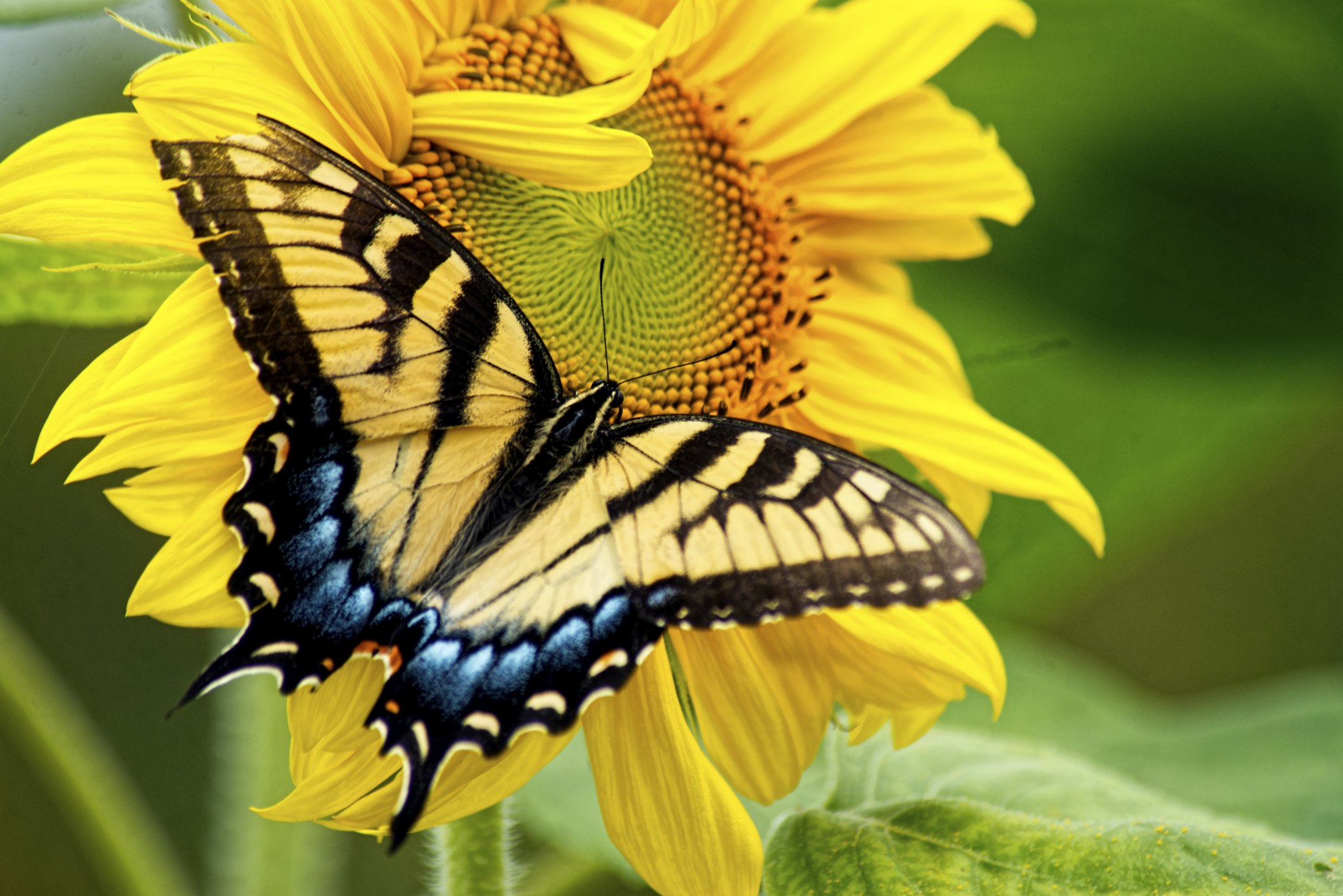 Flowers That Attract Butterflies and Hummingbirds | eHow