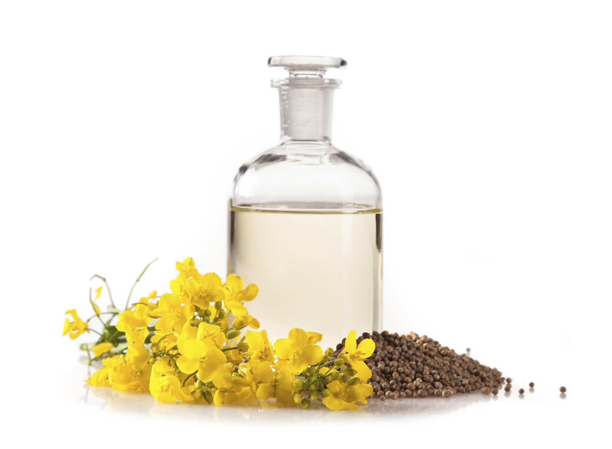 Edible Oil Plants : Difference between canola and vegetable oil ehow
