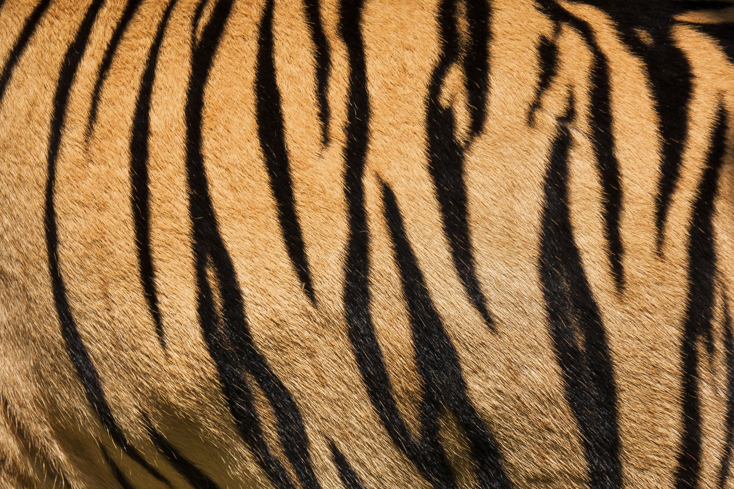 How to Make Tiger Stripe Patterns | eHow - photo#16