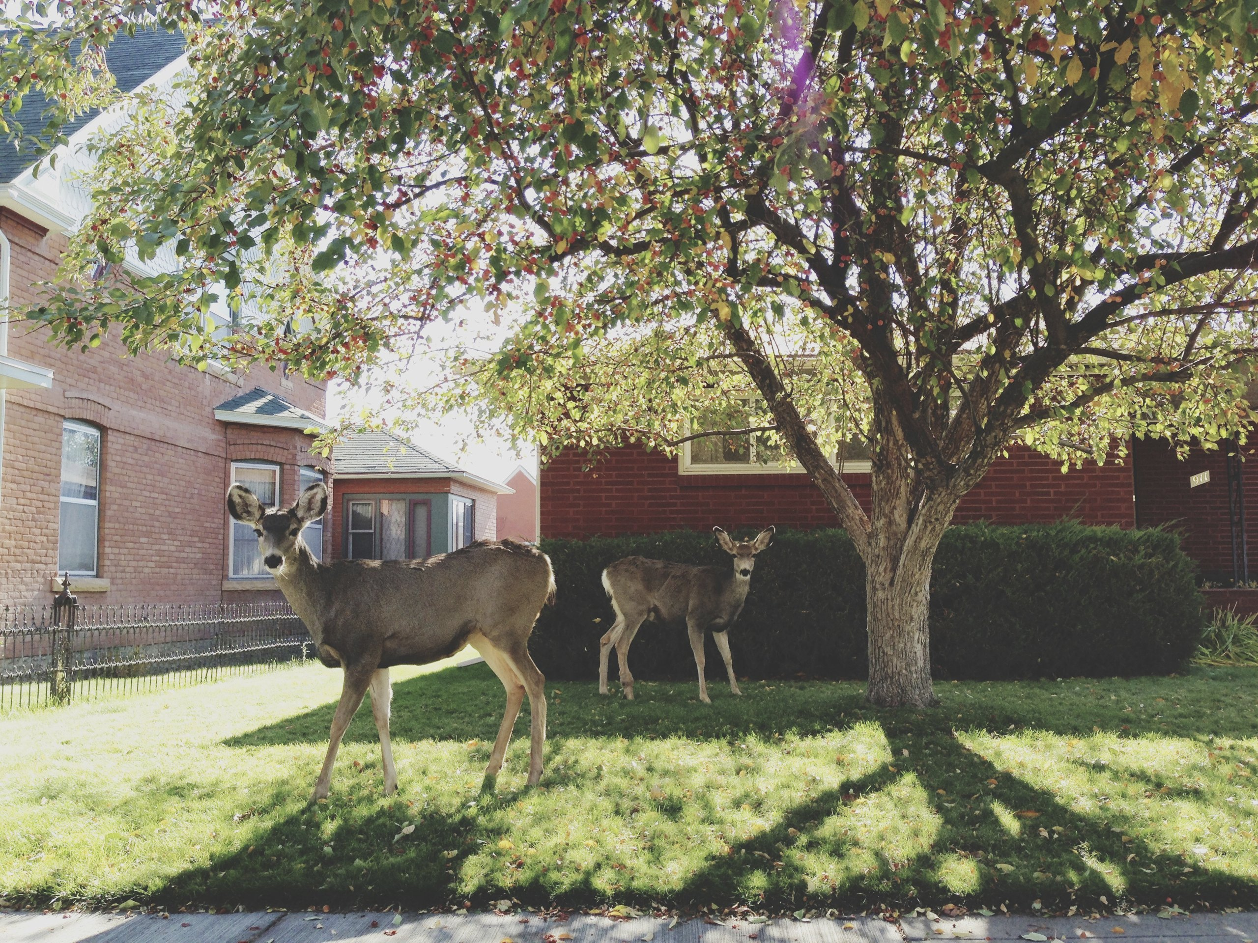 How To Keep Deer Out Of The Garden Ehow